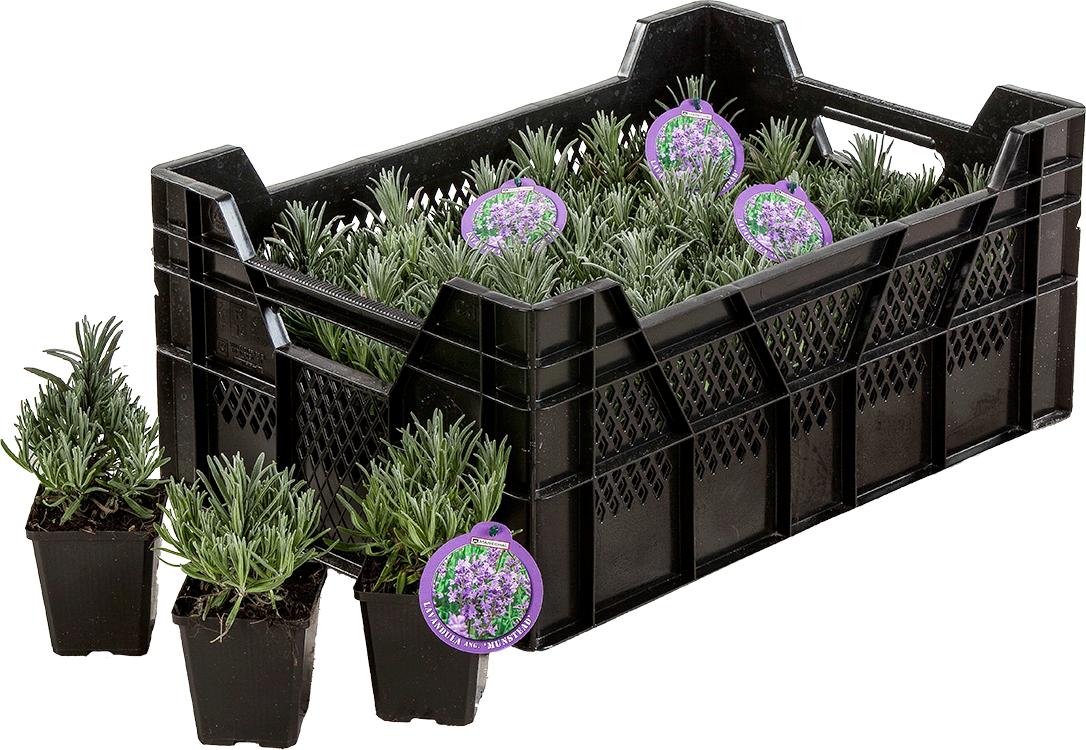 Vaste planten in pot P9