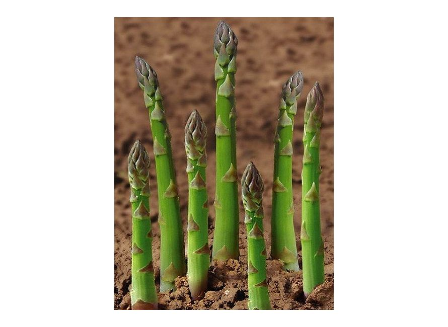 Asparagus Plants Green Garden Flower Bulbs