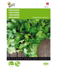 Coriander large seeded