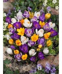 À grandes fleurs en mÉlange