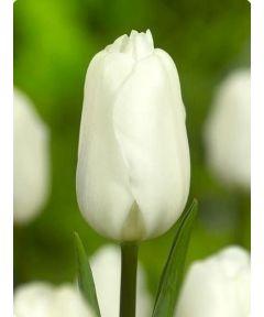 Agrass white