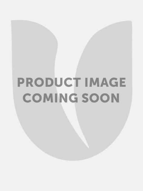 Eremurus pinocchio