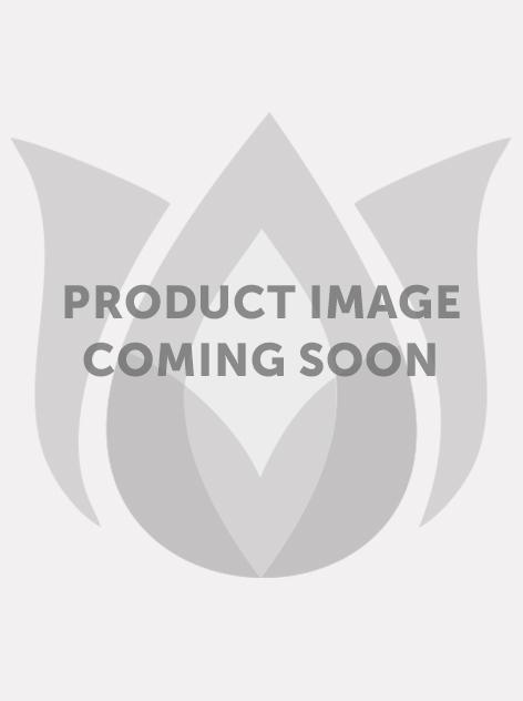 Geranium brookside